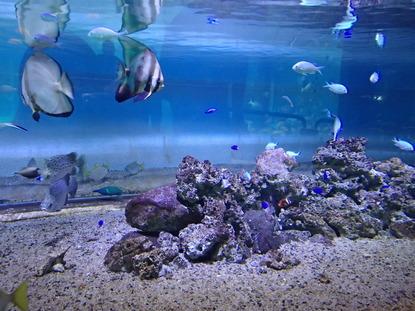 箱根園水族館 (105)