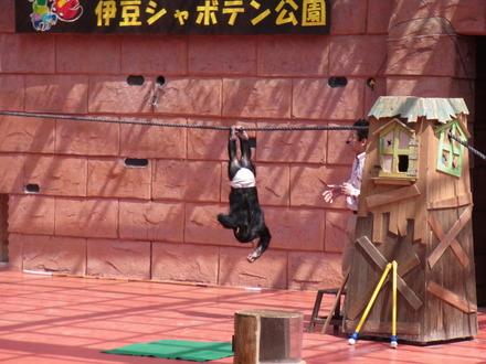 伊豆しゃぼてん公園 (81)