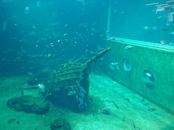 箱根園水族館 (106)