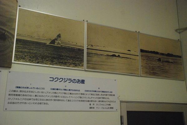 くじら博物館 (9)