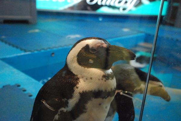 ペンギンのいるBAR (8)
