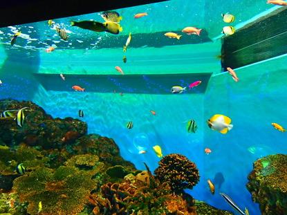 箱根園水族館 (121)