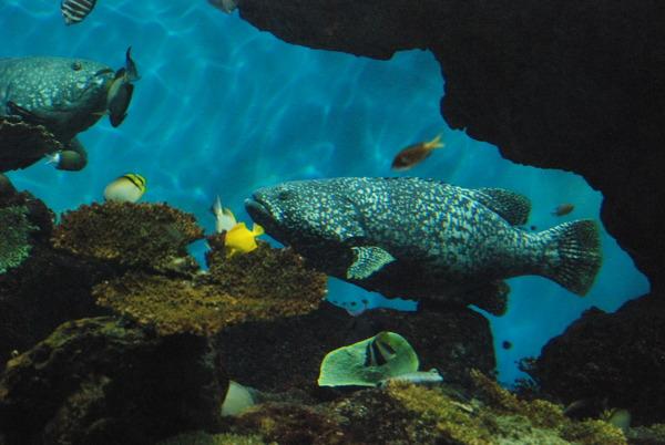 鹿児島水族館 (13)