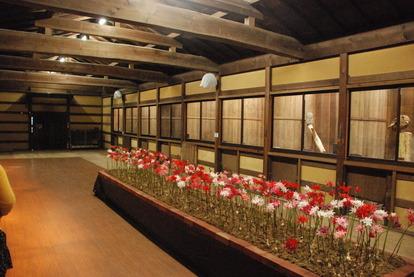 富士花鳥園 (18)
