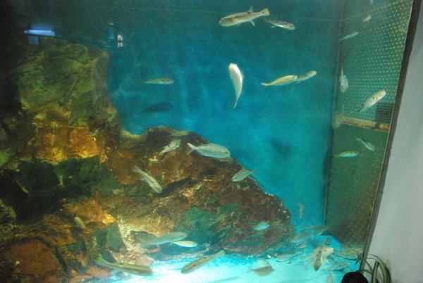 桂浜水族館 (14)