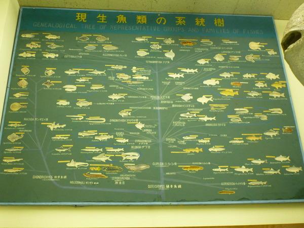 東京海洋大学 水産資料館 (85)