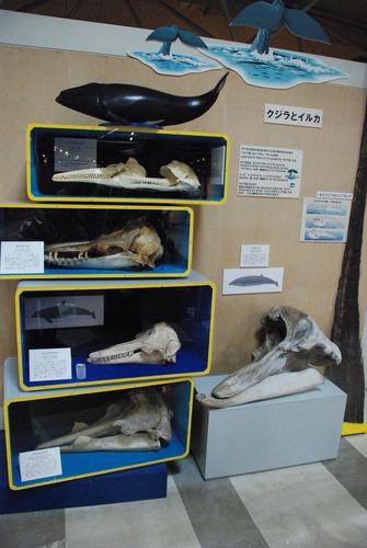 東海大海洋生物博物館 (19)