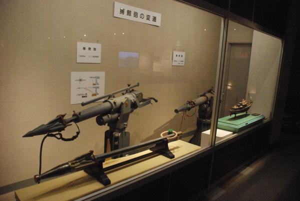 くじら博物館 (52)