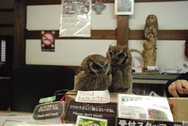 富士花鳥園 (2)