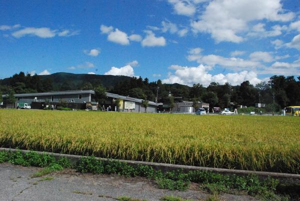 大王わさび農場 (1)
