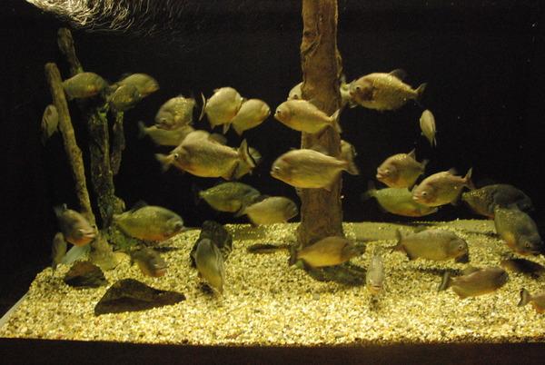 新屋島水族館 (33)