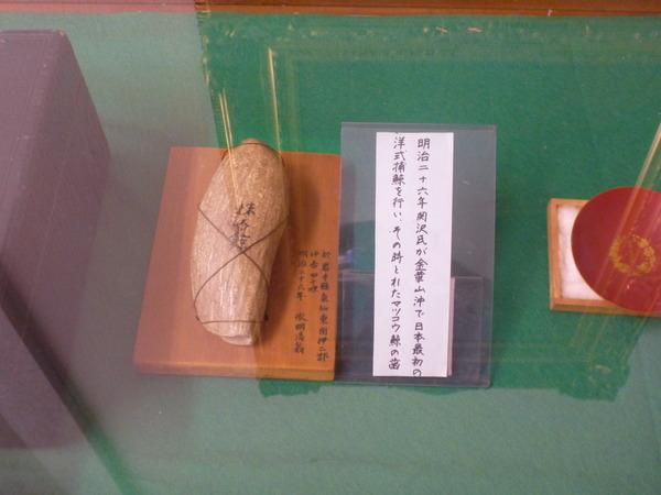 東京海洋大学 水産資料館 (12)