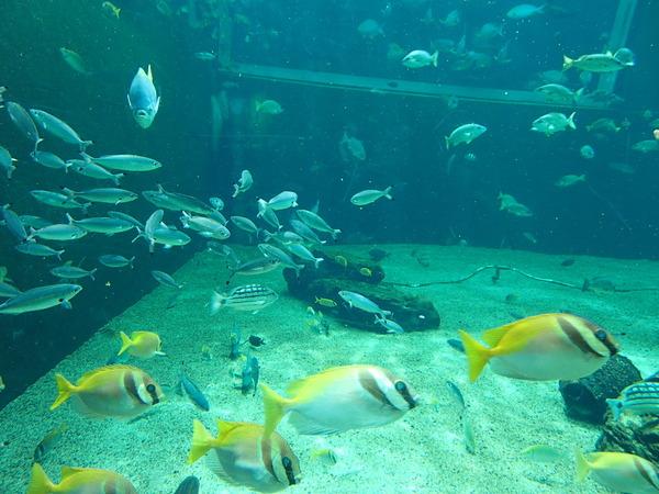 箱根園水族館 (117)