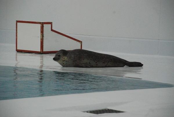 加茂水族館 (34)