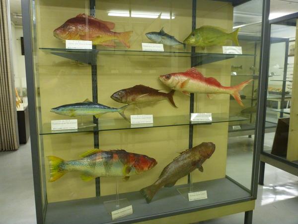 東京海洋大学 水産資料館 (83)