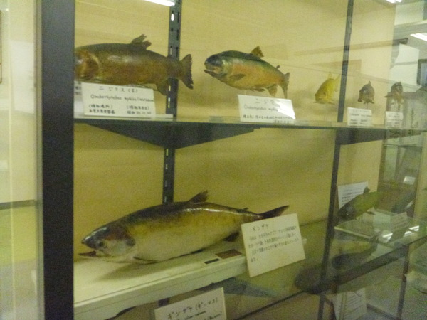 東京海洋大学 水産資料館 (73)