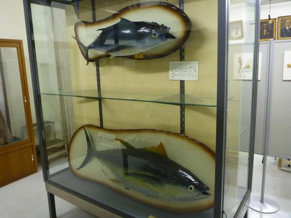 東京海洋大学 水産資料館 (80)