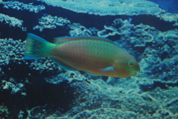 鹿児島水族館 (24)