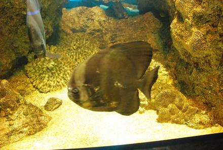 下田海中水族館 (32)