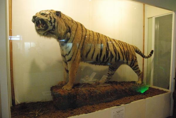 猫の博物館 (3)