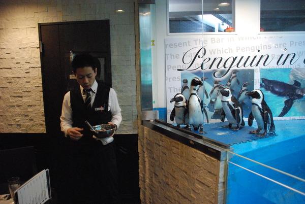 ペンギンのいるBAR (14)