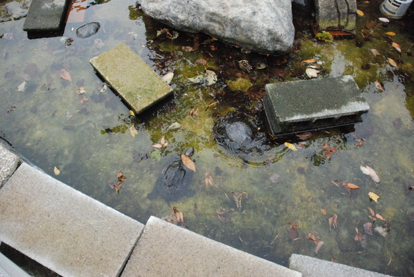 山梨県立富士湧水の里水族館 (34)