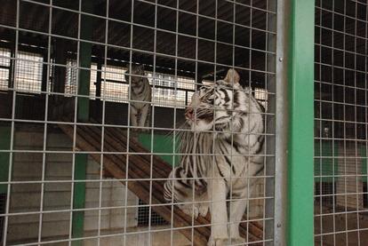 しろとり動物園 (29)