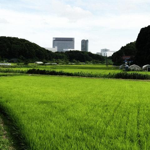 田園風景と近代都市