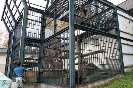 1810 旭川 旭山動物園 オランウータン01