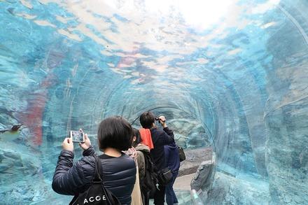 1810 旭川 旭山動物園 ペンギン館