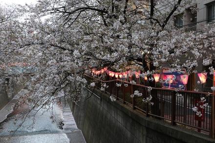 190407 目黒川桜祭り 夜桜01