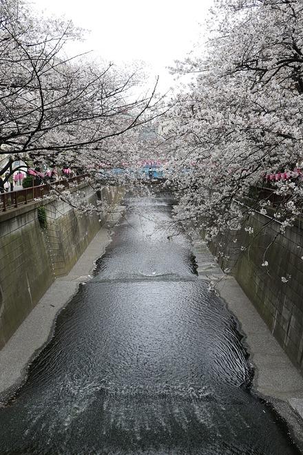 190330 目黒川の桜02