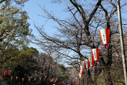 2003 上野恩賜公園の桜01