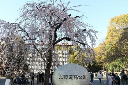 2003 上野恩賜公園の桜13