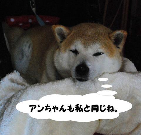 触られるの不得意犬