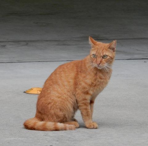 cat201509008