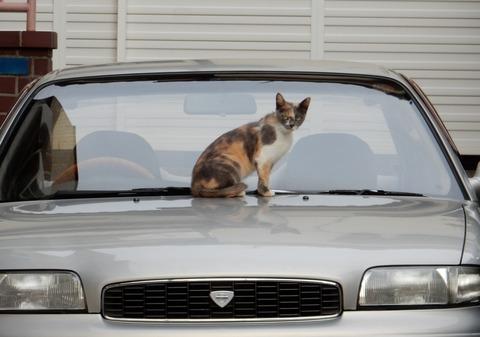 cat201509007