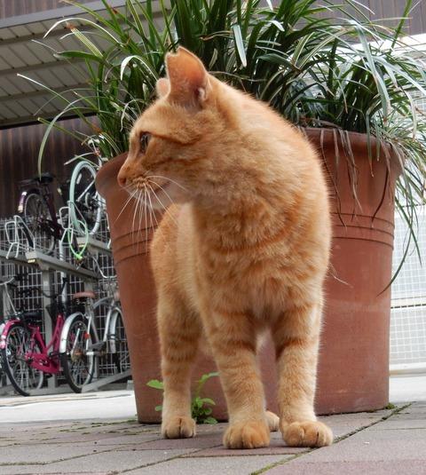 cat201509010