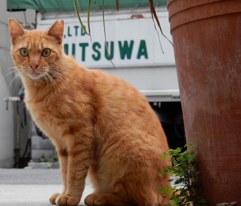 cat201509013