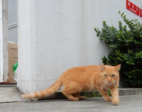 cat201509017