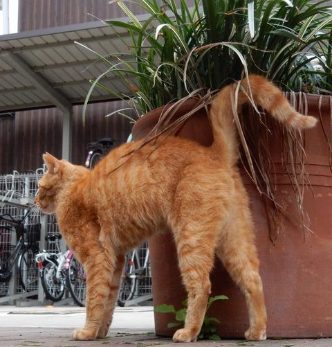 cat201509011