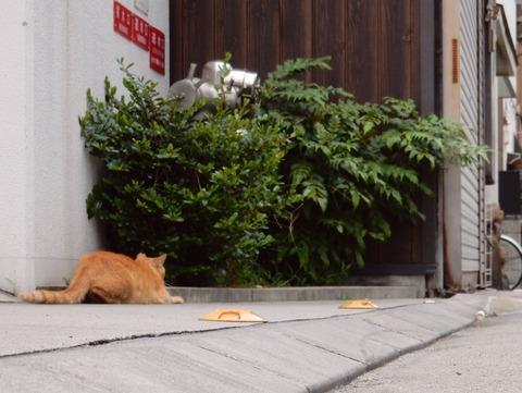 cat201509015