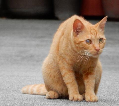 cat201509003