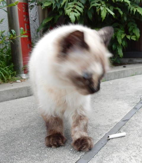 cat201509020