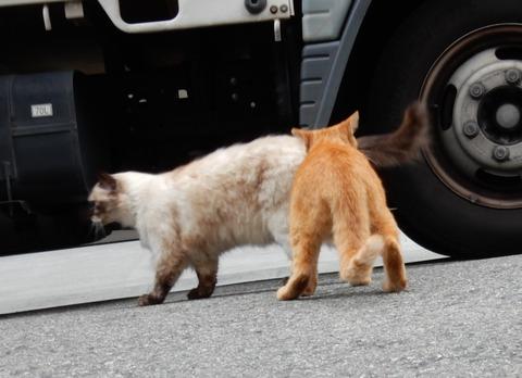 cat201509019