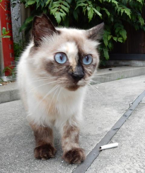 cat201509021