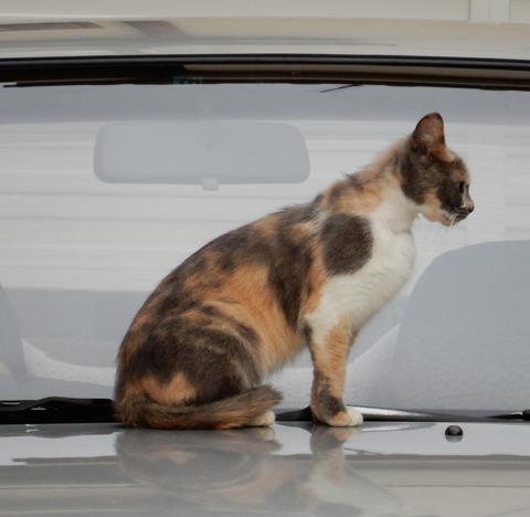 cat201509005