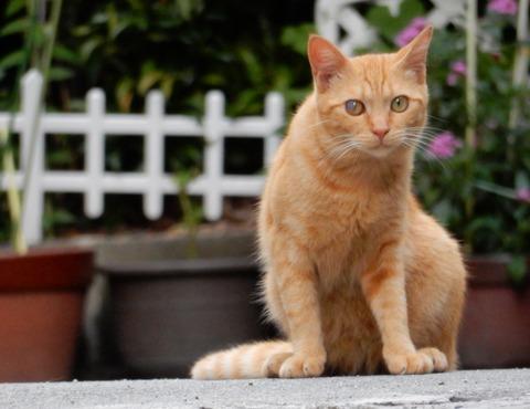 cat201509002