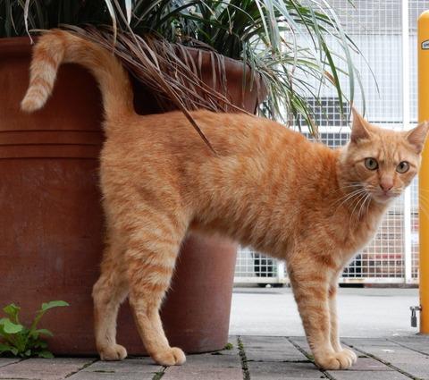 cat201509012