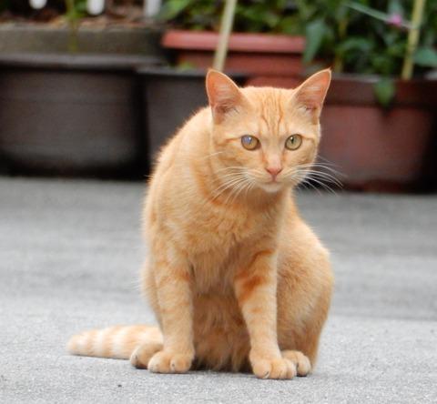 cat201509001